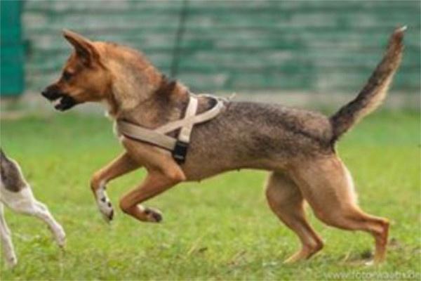 Erziehung Alltagstauglichkeit Hund. Individuelles Einzeltraining / Problemtherapie