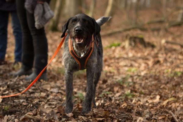 Erziehung Alltagstauglichkeit Hund. Freilaufen