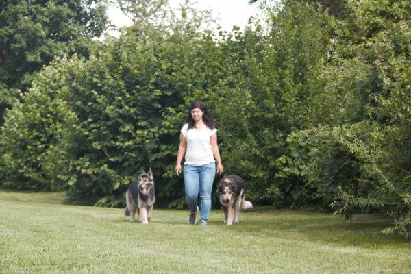 Erziehung Alltagstauglichkeit Hund. Basics