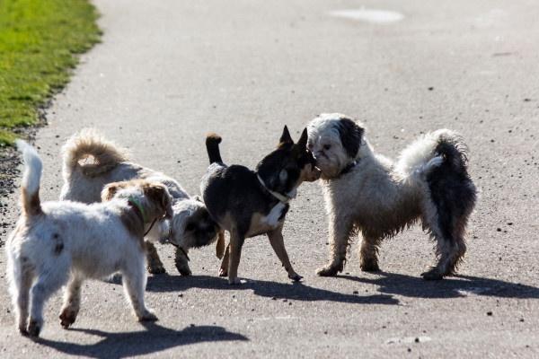 Erziehung Alltagstauglichkeit Hund. Kleinhundegruppen