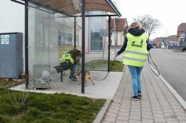Erziehung Alltagstauglichkeit Hund. Mantrailing
