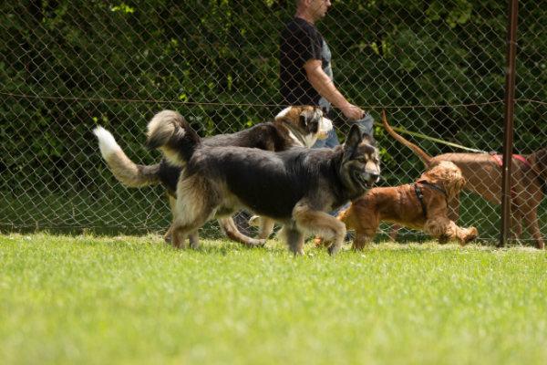 Erziehung Alltagstauglichkeit Hund. Mehrhundehaushalt