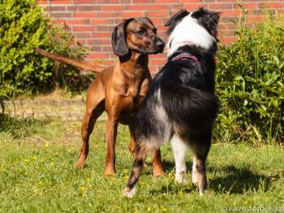 Erziehung Alltagstauglichkeit Auslastung Hund