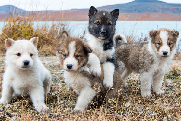 Erziehung Alltagstauglichkeit Hund. Welpengruppe Hundeschule